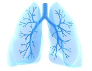 Atemwegserkrankungen: die Lunge